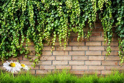 Pianta di esclusiva proprietà , distanza minima, danno al muro comune