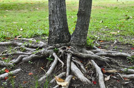 Le radici degli alberi condominiali: ricerca, recisione e criteri di ripartizione delle spese