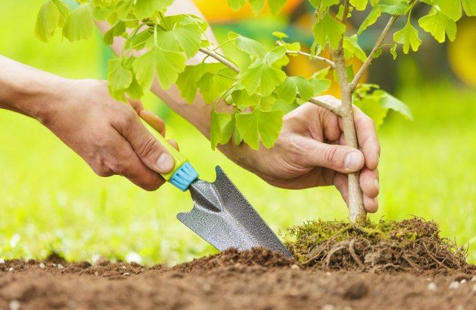 Condominio: uso della cosa comune. E' lecito piantare alberi e fiori nel giardino condominiale