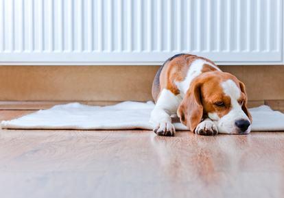 Il divieto di tenere animali nelle abitazioni private e nelle parti comuni