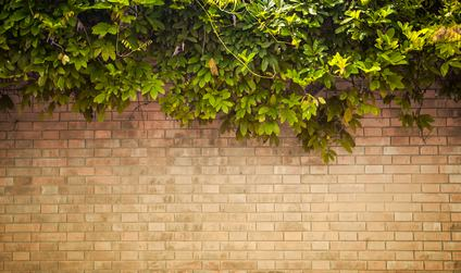 il vicino innalza un muro al confine tra due propriet