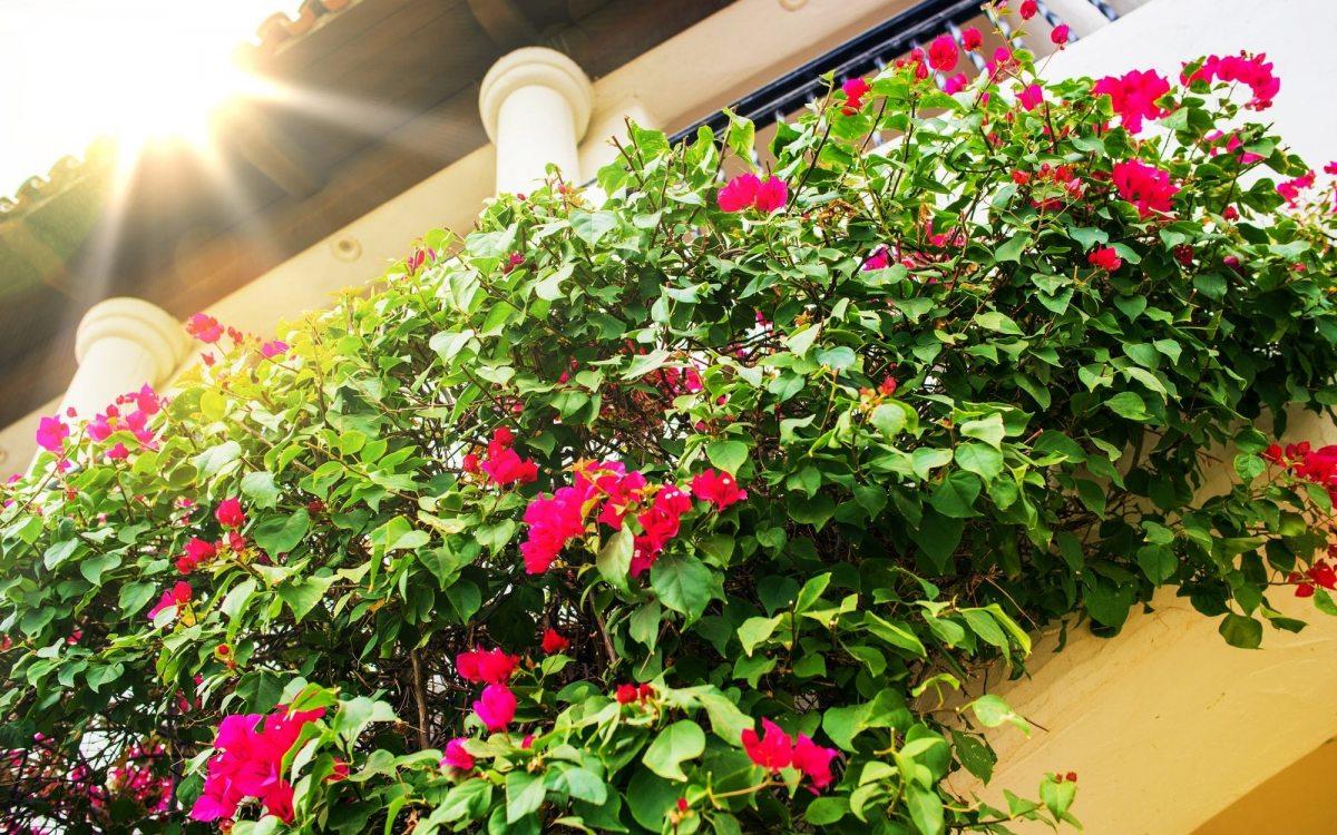 Le fioriere dei balconi in cemento armato non devono essere considerate parti comuni