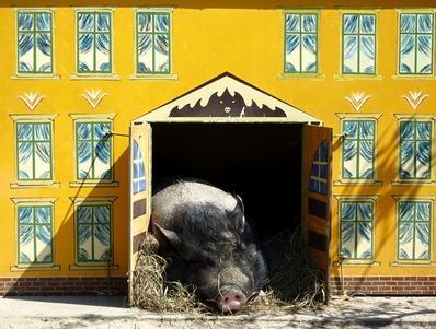 I condomini possono tenere gli animali in condominio ma devono farlo nel rispetto del regolamento