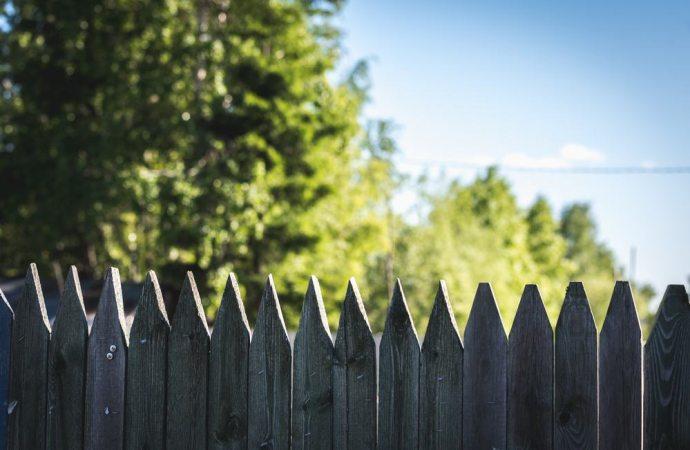 Il rispetto delle distanze degli alberi dal confine cambia in presenza di un muro divisorio dei fondi