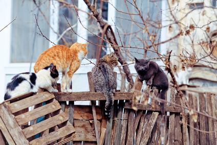 Colonie feline e gestione degli spazi condominiali
