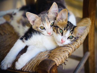 Il mantenimento e l'affidamento del gatto dopo la separazione. Si inizia a recepire la riforma del condominio.
