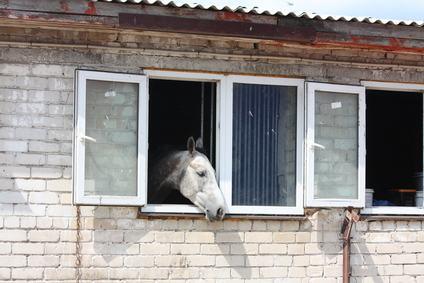 Animali domestici ed esotici in condominio? Analisi di una norma giuridicamente insostenibile.