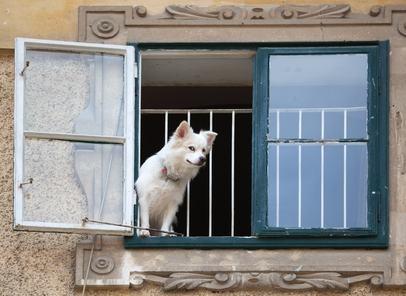 Chi dentro e chi fuori. Quali animali potranno rimanere ancora in condominio dopo la Riforma?