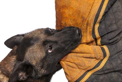 Cane che abbaia? morde l'ospite. Quali responsabilità possono essere addebitate al padrone dell'animale?