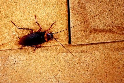 Ordinanza anti-scarafaggi. Tanto a pagare saranno i condomini.