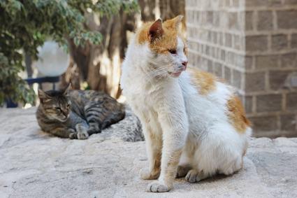 I gatti randagi attirati in condominio possono costituire una molestia.