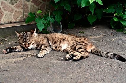 Condannato il vicino che uccide l'animale  da affezione.