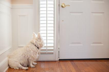 Il vicino va in vacanza e si «dimentica» il cane in casa.