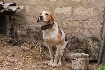 Il cane sporca. Condannato il padrone per mancata pulizia del recinto.