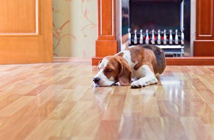 Cani in condominio: chi meno abbaia crea meno problemi