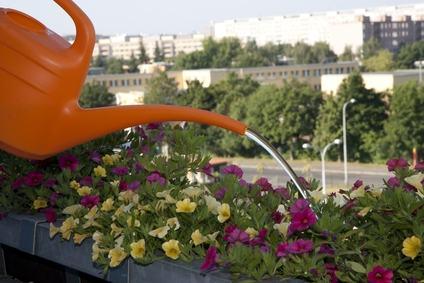 In condominio innaffiare le piante sul balcone diventa un reato.