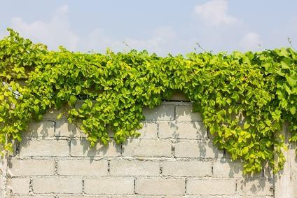 A quale distanza dal confine devono trovarsi le piante di alto fusto e le tubature di scarico?