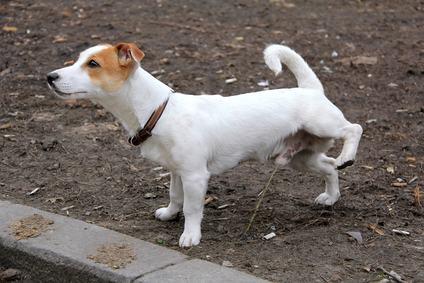Come portare a spasso il proprio cane senza danneggiare gli immobili altrui? La Cassazione appronta un piccolo galateo per i proprietari