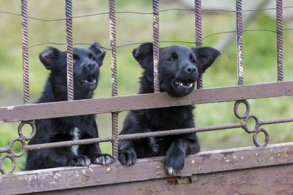 I cani abbaiano incessantemente? Pazienza, i vicini li devono sopportare.