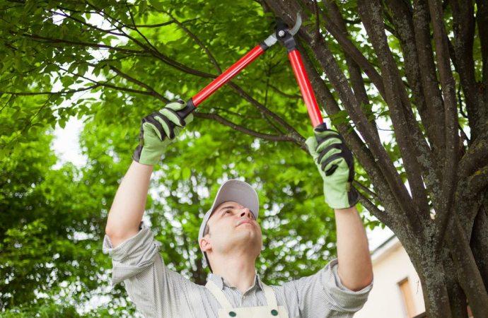 Potatura degli alberi, competenza e ripartizione delle spese
