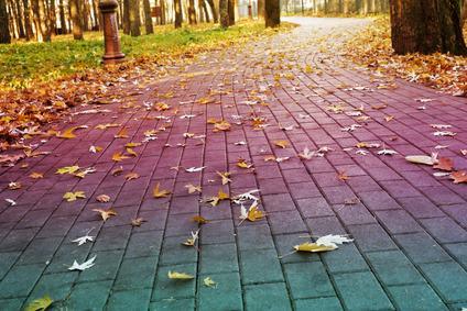 Nessun risarcimento del danno in caso di caduta delle foglie dall'albero del vicino
