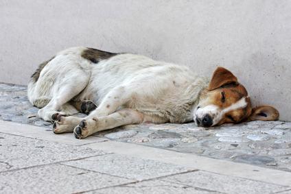 """Pastore tedesco abbandonato sul terrazzo. Scatta il reato di """"abbandono di animali"""""""