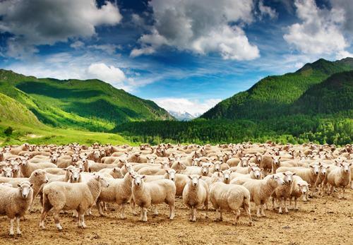 Rumori, campanacci e belati delle pecore. Non sempre è possibile configurare un pregiudizio risarcibile