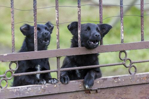 Se i cani danni fastidio al vicino, non può essere il Sindaco a ordinare di spostarli dal confine.