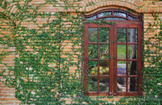 Che fare per rampicanti e piante invadenti dei vicini?