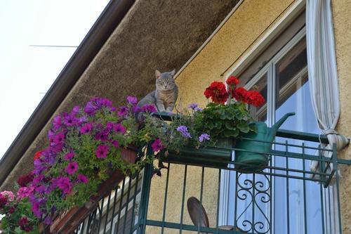 Il condomino che getta rifiuti dal balcone sporcando il giardino del vicino commette reato