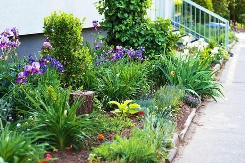 Piante in vaso ed in aiuola nel giardino condominiale