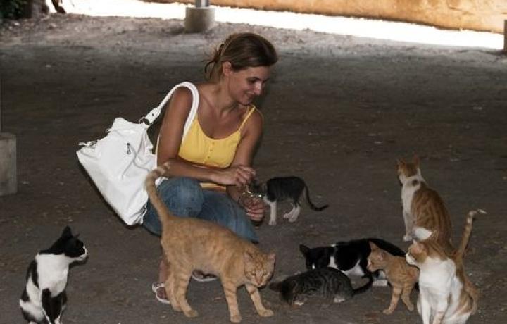 Per accudire una colonia felina in condominio bisogna rispettare delle regole