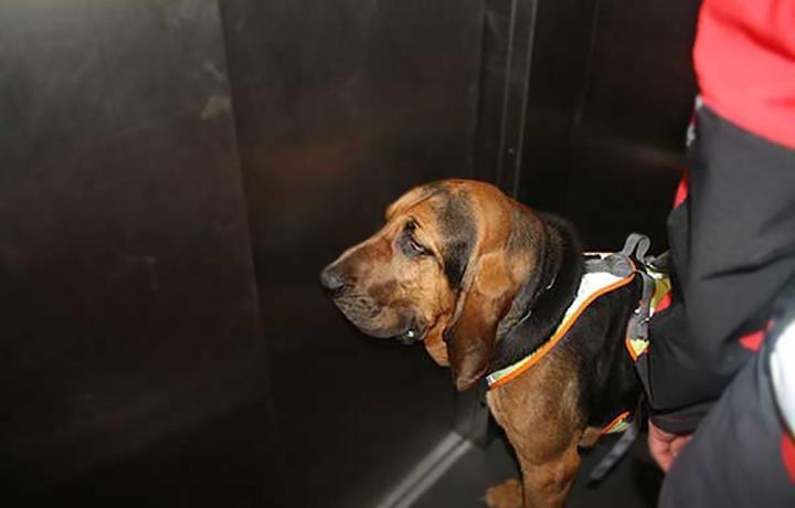 È vietato portare i cani in ascensore?