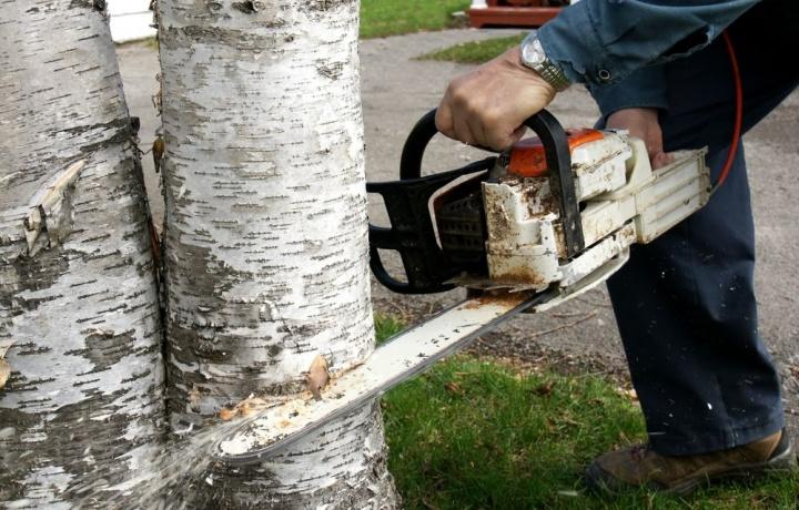 Anche in assenza di una specifica delibera, l'amministratore di condominio può abbattere gli alberi.