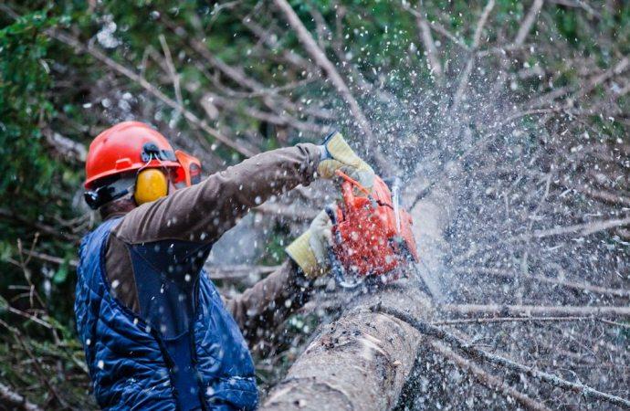 Abbattimento di un pino in un cortile condominiale. Il TAR dice si all'accesso agli atti da parte dei condomini