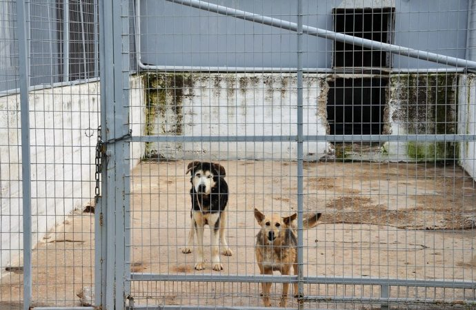 Animali in condominio: legittimo il loro sequestro preventivo se procurano rumori e cattivi odori.