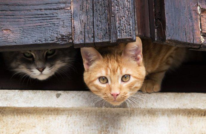 Il condomino che versa disinfettante in cortile, per allontanare i gatti, commette reato