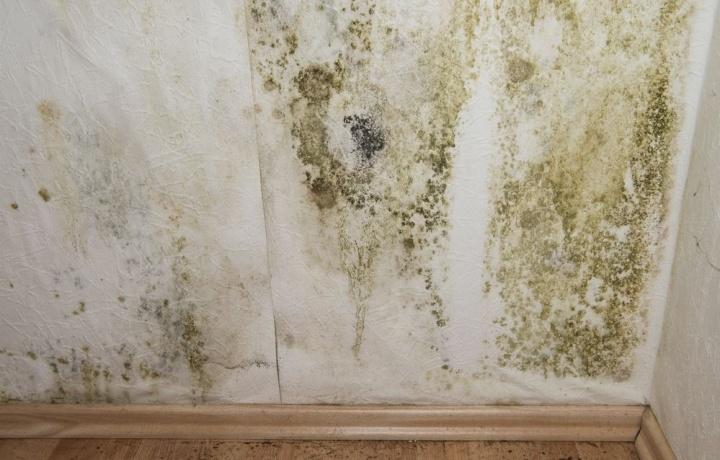Macchie di muffa sul soffitto dell'appartamento. L'assicurazione copre il condominio nel risarcimento al conduttore