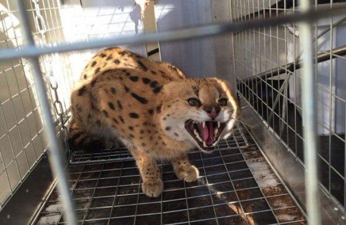 Stop alla detenzione di animali esotici e potenzialmente pericolosi. Una sentenza che potrà avere risvolti anche in ambito condominiale