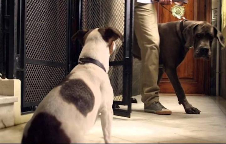 Stop agli animali domestici in ascensore. Una nuova sentenza riapre il dibattito.