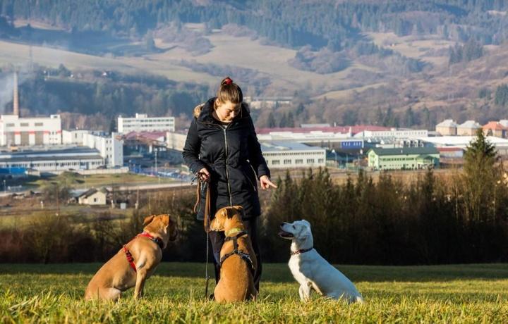 Dieci cani di grossa taglia in un appartamento condominiale. Ecco come difendersi