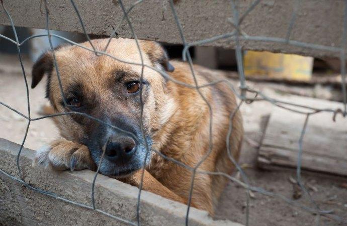 Chi detiene animali nella propria abitazione in condizioni incompatibili con la loro natura, è responsabile penalmente