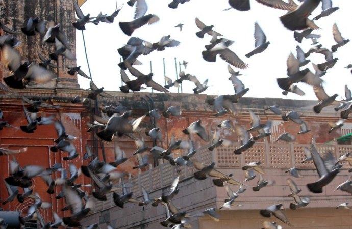 Il problema dei piccioni nelle grandi città tra installazioni di dissuasori e divieti previsti dal regolamento condominiale