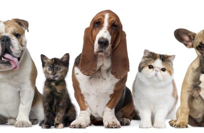 Quando cani e gatti danneggiano le parti comuni condominiali. Come tutelarsi?