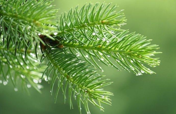Aghi di pino che intasano la grondaia. Il risarcimento del danno non è automatico