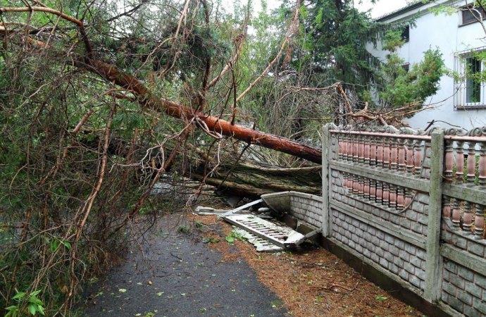 Abbattere un albero in un piccolo condominio è un'innovazione