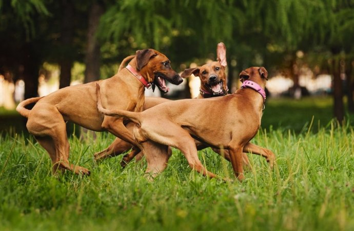 Cani nel giardino condominiale. Possono accedervi a condizioni che siano rispettate le regole di igiene e sicurezza