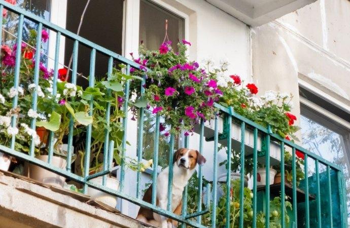 Caduta di un cane di piccola taglia dal balcone. Quando non è colpa del condominio?