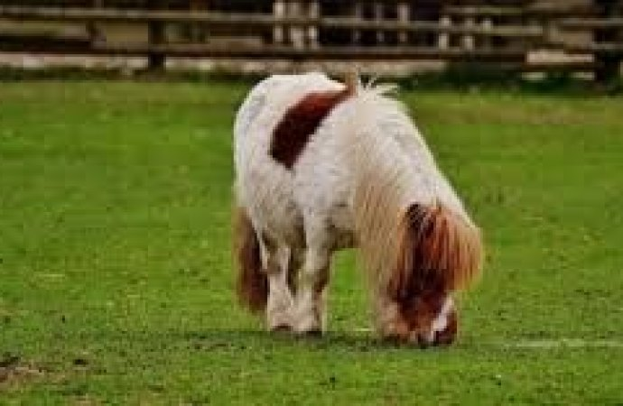 Animali in condominio. Il pony è da compagnia