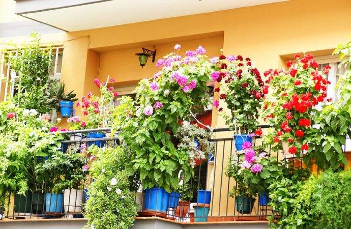 Piante, balconi e proprietà sottostante